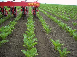chopstar 160 20131006 1940481411 300x225 - Einboeck Chopstar