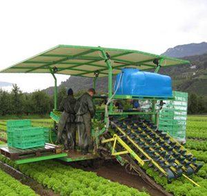 salad harvester 300x284 - Hortech Vegetable Equipment