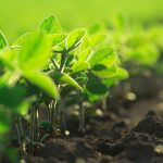 ORGANIC 150x150 - FUSION FARMING - FREE Webinar 16th & 23rd of February @ 5pm