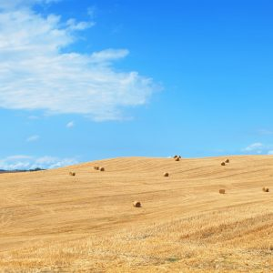 iStock 154449593 300x300 - Hay and Silage Tines