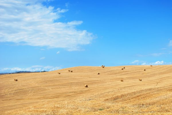 iStock 154449593 600x400 - Hay and Silage Tines